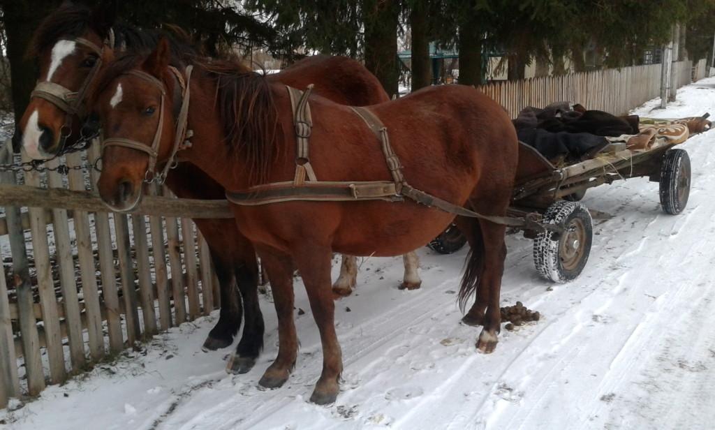 konny-zaprzeg-sobolowka-czerwone-chatki