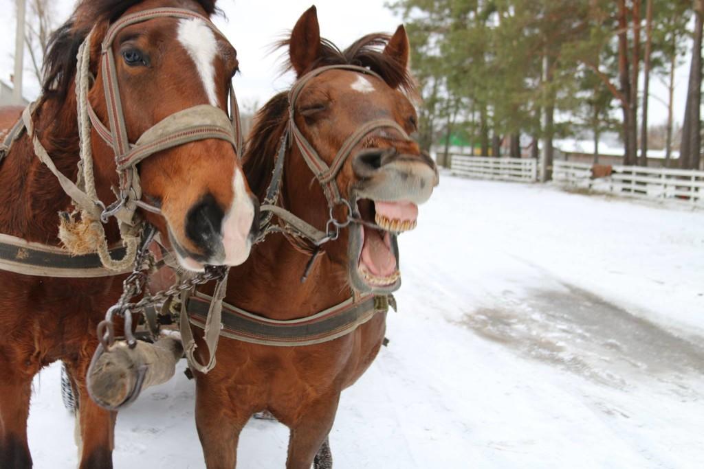 marchlewszczyzna-sobolowka-konie